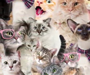cat, wallpaper, and funny image