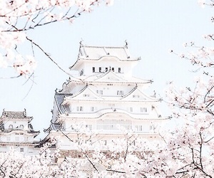 pastel, blue, and cherry blossom image