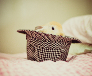 bunny, hat, and cute image