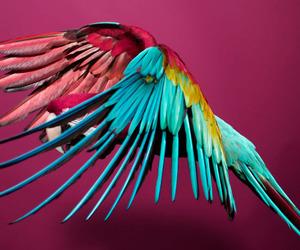 birds, nature, and rainbows image