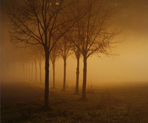 landscape, photography, and trees image