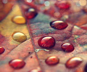 autumn, leaf, and beautiful image