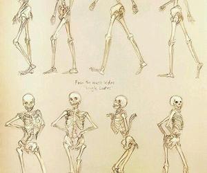 skeleton, bones, and single ladies image