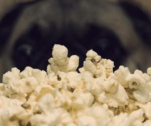 dog, eye, and food image
