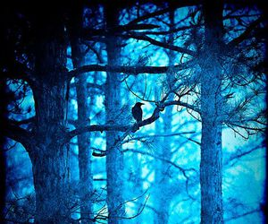 blue, woods, and forest image