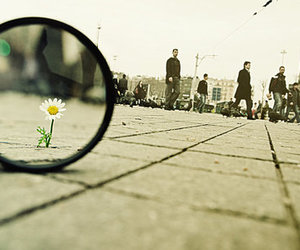 flowers, people, and street image