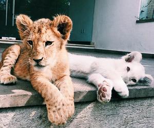 animals, white, and beautiful image