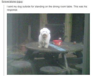 lol, funny, and dog image