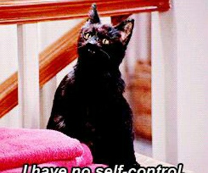 funny, quote, and salem image