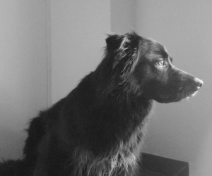 animal, black and white, and looking image