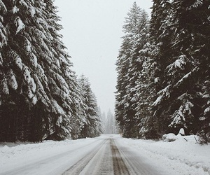 atmosphere, snow, and forest image