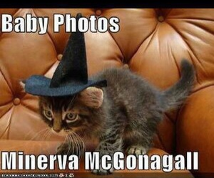 cat, fun, and harry potter image