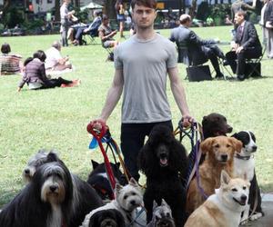 dog, harry potter, and daniel radcliffe image
