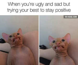 funny, cat, and ugly image