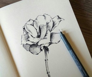 art, rose, and draw image