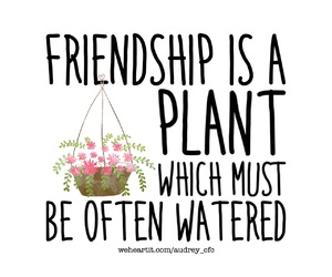 flowers, friend, and friendship image