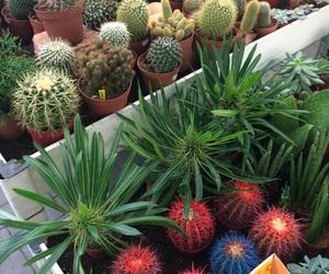 art, cacti, and cactus image