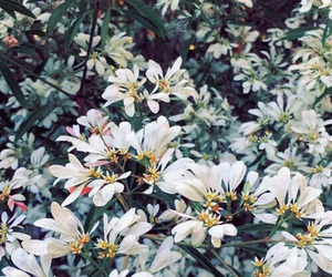 white, flowers, and plants image