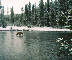 deer, drinking, and snow image