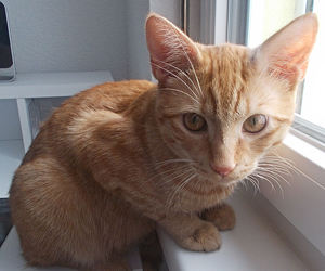 cats, cute, and kitten image