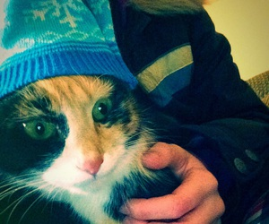 winter, cat, and funny cats image