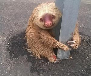 sloth, animal, and cute image
