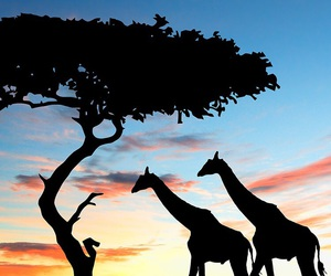 giraffe and africa image