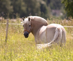 beautiful, equestrian, and equine image