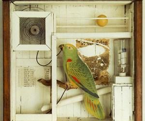 Collage and ornithology image