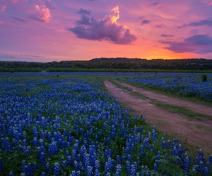 beautiful, scenery, and Texas image