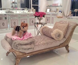 luxury, dog, and interior image