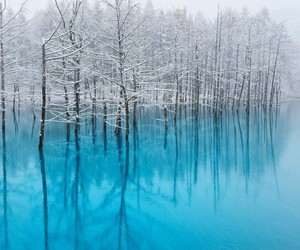 blue, trees, and water image