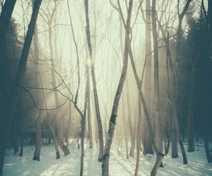 forest, sun, and snow image