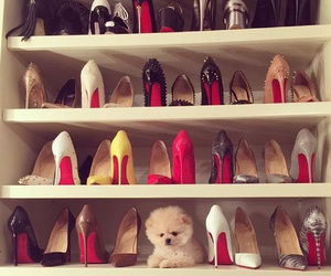 shoes, dog, and fashion image