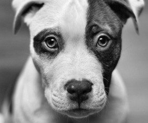 dog, puppy, and black and white image