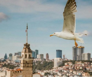 fotograf, istanbul, and photography image