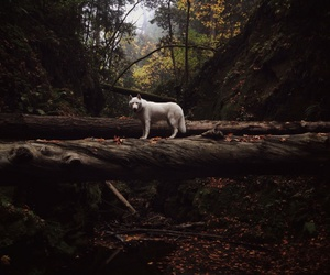 forest, nature, and animal image