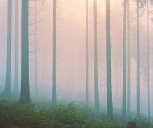 background, fog, and forest image
