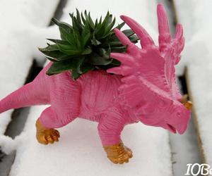 dinosaur, plant, and succulent image