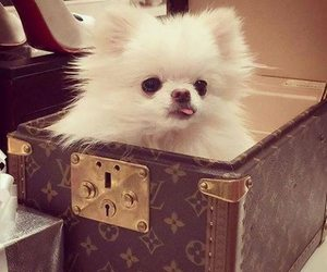 dog, cute, and luxury image