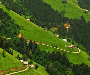 green, nature, and turkey image