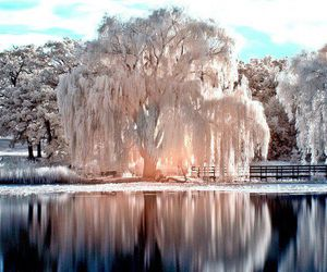 nature, tree, and snow image