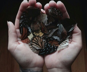 broken, butterfly, and grunge image