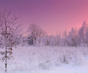 cold and nature image