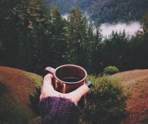 nature, coffee, and forest image