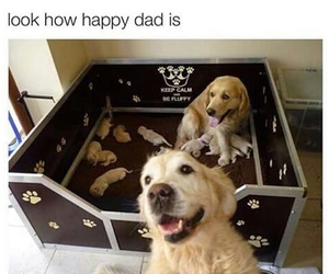 dog, family, and golden image