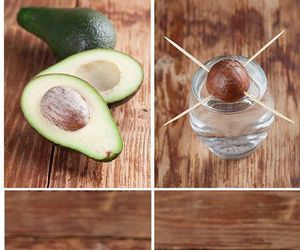 avocado, diy, and plants image