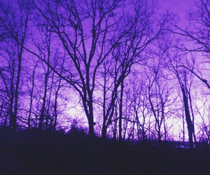 beautiful, forest, and purple image
