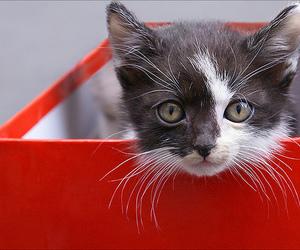 kitten, box, and cat image