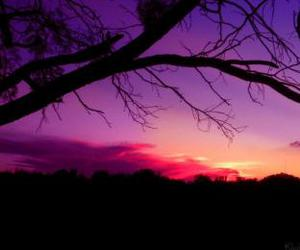 background, purple, and tree image